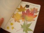 erbario-foglie-secche