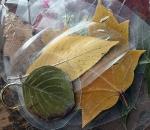 foglie-plastificate