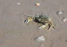 crab-1847507_960_720