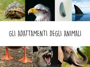 Adattamenti animali