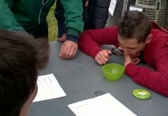 I ragazzi osservano la pedofauna rinvenuta durante l'escursione nell'Oasi
