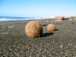 posidonia-spiaggiata-2